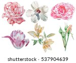 set with flowers. rose. lily.... | Shutterstock . vector #537904639
