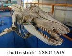 eden  new south wales ... | Shutterstock . vector #538011619
