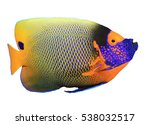 Tropical Fish Isolated  Blue...