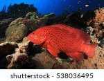 Coral Grouper. Fish On...