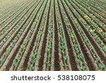 lettuce field | Shutterstock . vector #538108075