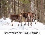 A Group Of Deer Crossing The...