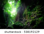fantasy mystical tropical mossy ... | Shutterstock . vector #538192129