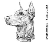 Hand Drawn Sketch Of Doberman...