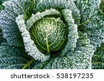 Frosted Vegetables In A Field...