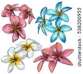 plumeria. hawaii  bali ... | Shutterstock .eps vector #538200955