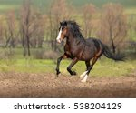 Bay Horse Galloping On Green...