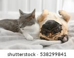Stock photo adorable pug and cute cat lying together on plaid 538299841