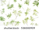 green branches pattern on white ... | Shutterstock . vector #538300909