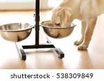 Golden Labrador Dog Eating Fro...