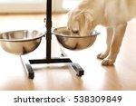 Golden Labrador Dog Eating Fro...