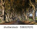 tunnel like avenue of... | Shutterstock . vector #538319191