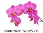 Purple Orchid Flower With Vein...
