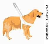 guide dog wears a white harness ... | Shutterstock .eps vector #538492765