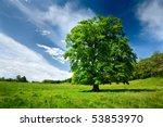 Single Big Oak Tree In A Meado...