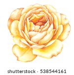 Flowers Rose Watercolor...