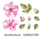 vintage set of blooming roses.... | Shutterstock . vector #538562785