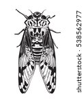 pen and ink drawing of a cicada ... | Shutterstock .eps vector #538562977