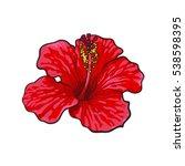 Single Bright Red Hibiscus...