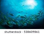 snapper parade  galapagos ... | Shutterstock . vector #538609861