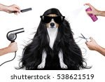 hairdresser dog ready to look... | Shutterstock . vector #538621519