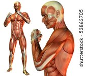 3d Rendering Of The Muscle Man...