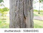 tree bark | Shutterstock . vector #538643341