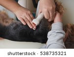 dog test on animal hospital | Shutterstock . vector #538735321