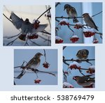 Collage With Winter Birds...