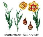 hand drawn illustration of...   Shutterstock . vector #538779739