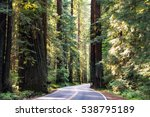 the avenue of the giants is a... | Shutterstock . vector #538795189