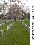 Small photo of Rows of tombstones at Arlington National Cometary