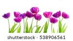 Purple Tulips  Isolated On...