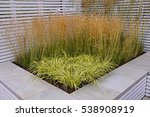 a display of grasses in a... | Shutterstock . vector #538908919