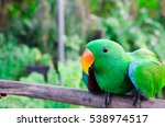 the magic bird | Shutterstock . vector #538974517