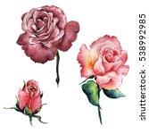 wildflower rose flower in a... | Shutterstock . vector #538992985