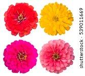 Zinnia Flower Collection Set O...
