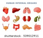 internal organs vector anatomy... | Shutterstock .eps vector #539012911