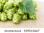 fresh green hop on a wooden... | Shutterstock . vector #539013667