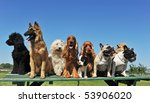 Stock photo group of puppies purebred dogs on a table 53906020