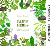 culinary herbs ornament with... | Shutterstock .eps vector #539060821