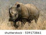 White Rhino Or Square Lipped...
