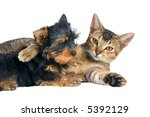 Stock photo the puppy and kitten 5392129