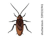 cockroach icon in cartoon style ... | Shutterstock .eps vector #539231941