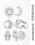 sketch of elephant sun flower... | Shutterstock . vector #539301445