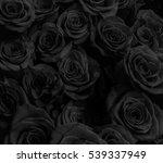 Dark Roses Background. Greetin...