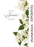 vector jasmine flowers banner.... | Shutterstock .eps vector #539369551