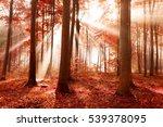 magic forest | Shutterstock . vector #539378095