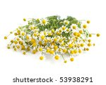chamomile on a white background | Shutterstock . vector #53938291