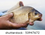 Crucian carp in fisherman's hands, sunset soft light - stock photo